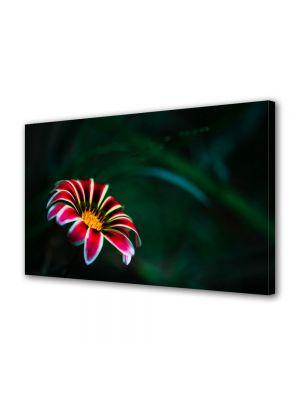 Tablou Canvas Luminos in intuneric VarioView LED Flori Floare cu petale rosii
