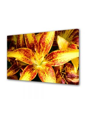 Tablou Canvas Flori Liliac asiatic