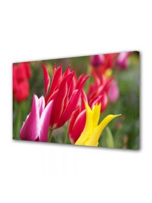 Tablou Canvas Flori Flori colorate