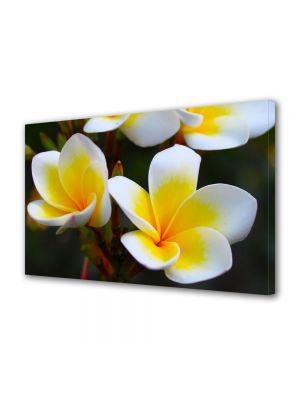 Tablou Canvas Flori Flori Frangipani