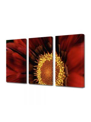 Set Tablouri Multicanvas 3 Piese Flori Floare Gazania