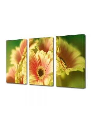 Set Tablouri Multicanvas 3 Piese Flori Buchet de gerbera