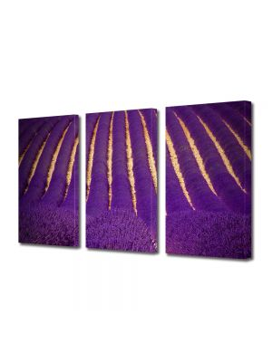 Set Tablouri Multicanvas 3 Piese Flori Camp superb violet