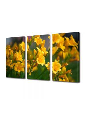 Set Tablouri Multicanvas 3 Piese Flori Liliac Galben