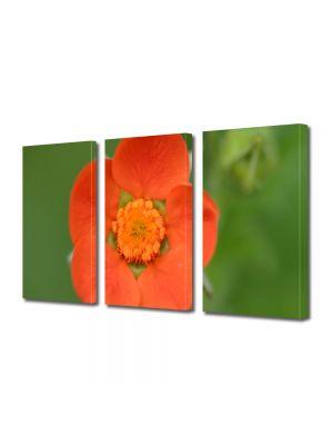 Set Tablouri Multicanvas 3 Piese Flori O floare portocalie