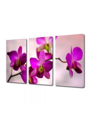 Set Tablouri Multicanvas 3 Piese Flori Culoare de orhidee