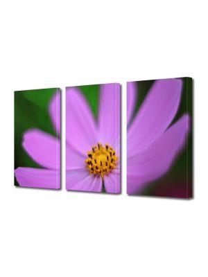 Set Tablouri Multicanvas 3 Piese Flori Floare violet si galbena