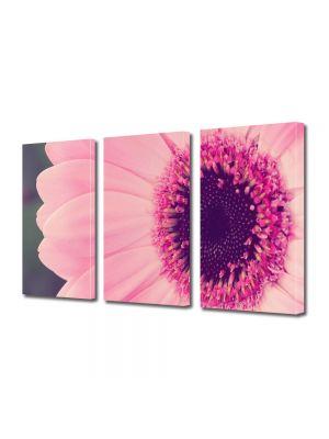 Set Tablouri Multicanvas 3 Piese Flori Gerbera roz