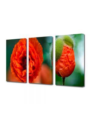 Set Tablouri Multicanvas 3 Piese Flori Mac