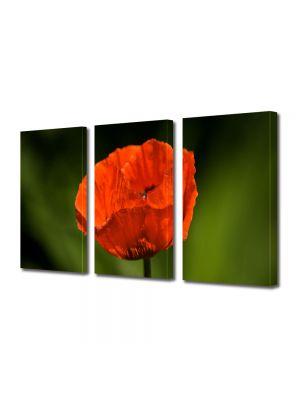Set Tablouri Multicanvas 3 Piese Flori Floare de mac
