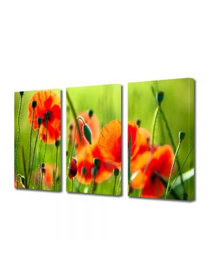 Set Tablouri Multicanvas 3 Piese Flori Maci frumosi