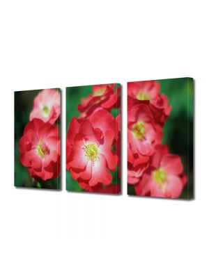 Set Tablouri Multicanvas 3 Piese Flori Trandafiri de gradina