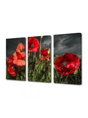 Set Tablouri Multicanvas 3 Piese Flori Maci inainte de furtuna