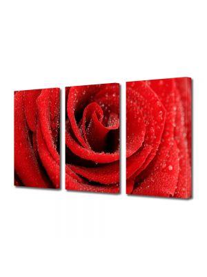 Set Tablouri Multicanvas 3 Piese Flori Trandafir cu bruma