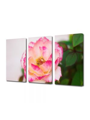 Set Tablouri Multicanvas 3 Piese Flori Trandafir alb