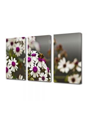Set Tablouri Multicanvas 3 Piese Flori Albina pe Flori Albe cu Violet