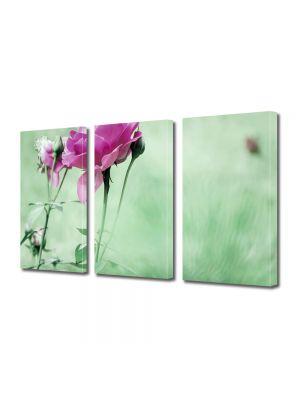 Set Tablouri Multicanvas 3 Piese Flori Trandafiri cadou