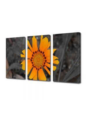 Set Tablouri Multicanvas 3 Piese Flori Floare a soarelui