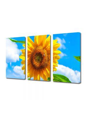 Set Tablouri Multicanvas 3 Piese Flori Sora soarelui