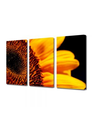 Set Tablouri Multicanvas 3 Piese Flori Florea soarelui in detaliu