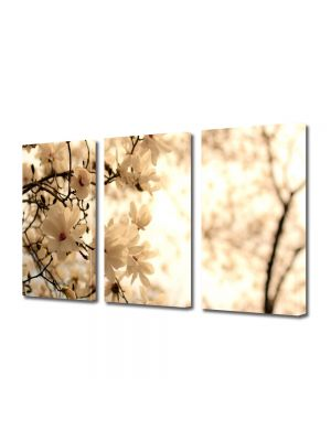Set Tablouri Multicanvas 3 Piese Flori Copac inflorit