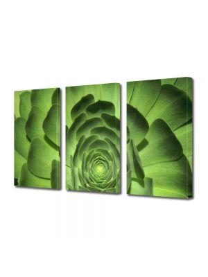 Set Tablouri Multicanvas 3 Piese Flori Floare cu petale verzi