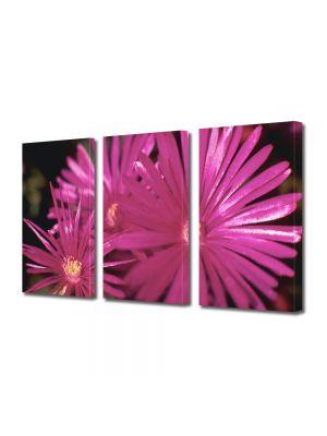 Set Tablouri Multicanvas 3 Piese Flori Petale subtiri