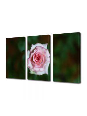Set Tablouri Multicanvas 3 Piese Flori Fir de Trandafir Violet