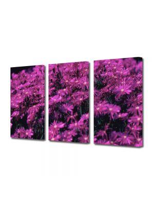 Set Tablouri Multicanvas 3 Piese Flori Violet aprins