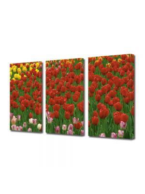 Set Tablouri Multicanvas 3 Piese Flori Coloritul florilor