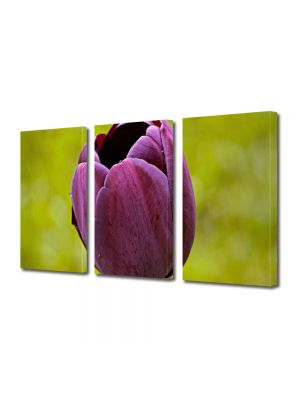 Set Tablouri Multicanvas 3 Piese Flori O lalea
