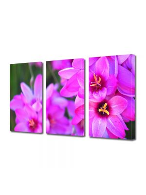 Set Tablouri Multicanvas 3 Piese Flori Culori vibrante