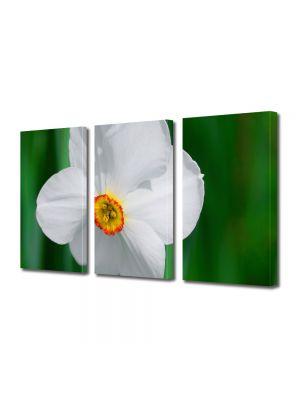 Set Tablouri Multicanvas 3 Piese Flori Albul perfect