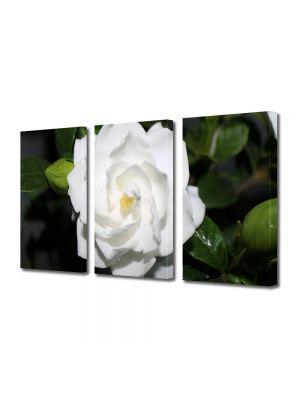 Set Tablouri Multicanvas 3 Piese Flori Floare alba