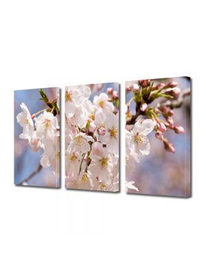 Set Tablouri Multicanvas 3 Piese Flori Flori albe japoneze