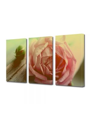 Set Tablouri Multicanvas 3 Piese Flori trandafir roz piersica