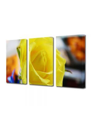 Set Tablouri Multicanvas 3 Piese Flori Trandafir galben singuratic