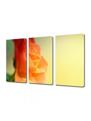 Set Tablouri Multicanvas 3 Piese Flori Trandafir visator