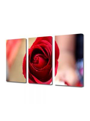 Set Tablouri Multicanvas 3 Piese Flori Fir de trandafir rosu