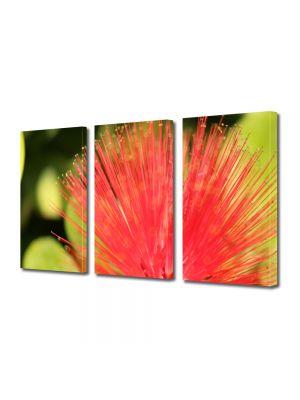 Set Tablouri Multicanvas 3 Piese Flori Floare aparte