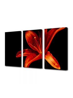 Set Tablouri Multicanvas 3 Piese Flori Floare pe fundal negru