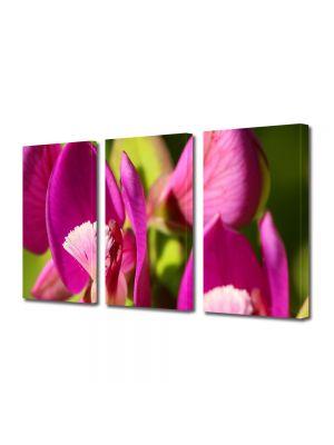 Set Tablouri Multicanvas 3 Piese Flori Flori in lumina soarelui