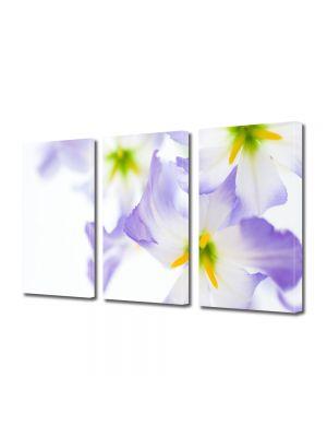 Set Tablouri Multicanvas 3 Piese Flori Lumina puternica