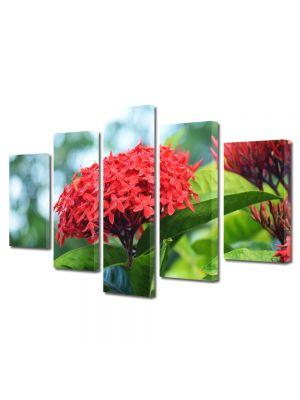 Set Tablouri Multicanvas 5 Piese Flori Floare Rosie