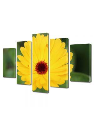 Set Tablouri Multicanvas 5 Piese Flori Inflorire