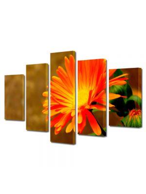 Set Tablouri Multicanvas 5 Piese Flori Floare Portocalie