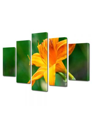 Set Tablouri Multicanvas 5 Piese Flori Fir de liliac portocaliu