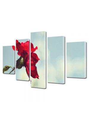 Set Tablouri Multicanvas 5 Piese Flori Trandafir rosu si cer senin