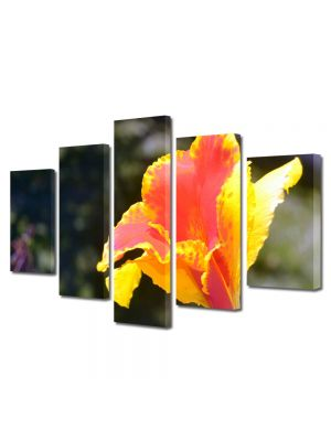 Set Tablouri Multicanvas 5 Piese Flori Floricica in lumina soarelui