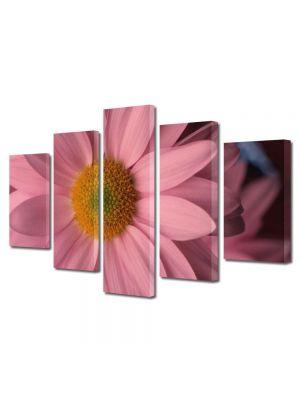 Set Tablouri Multicanvas 5 Piese Flori Flori cu petale roz pal